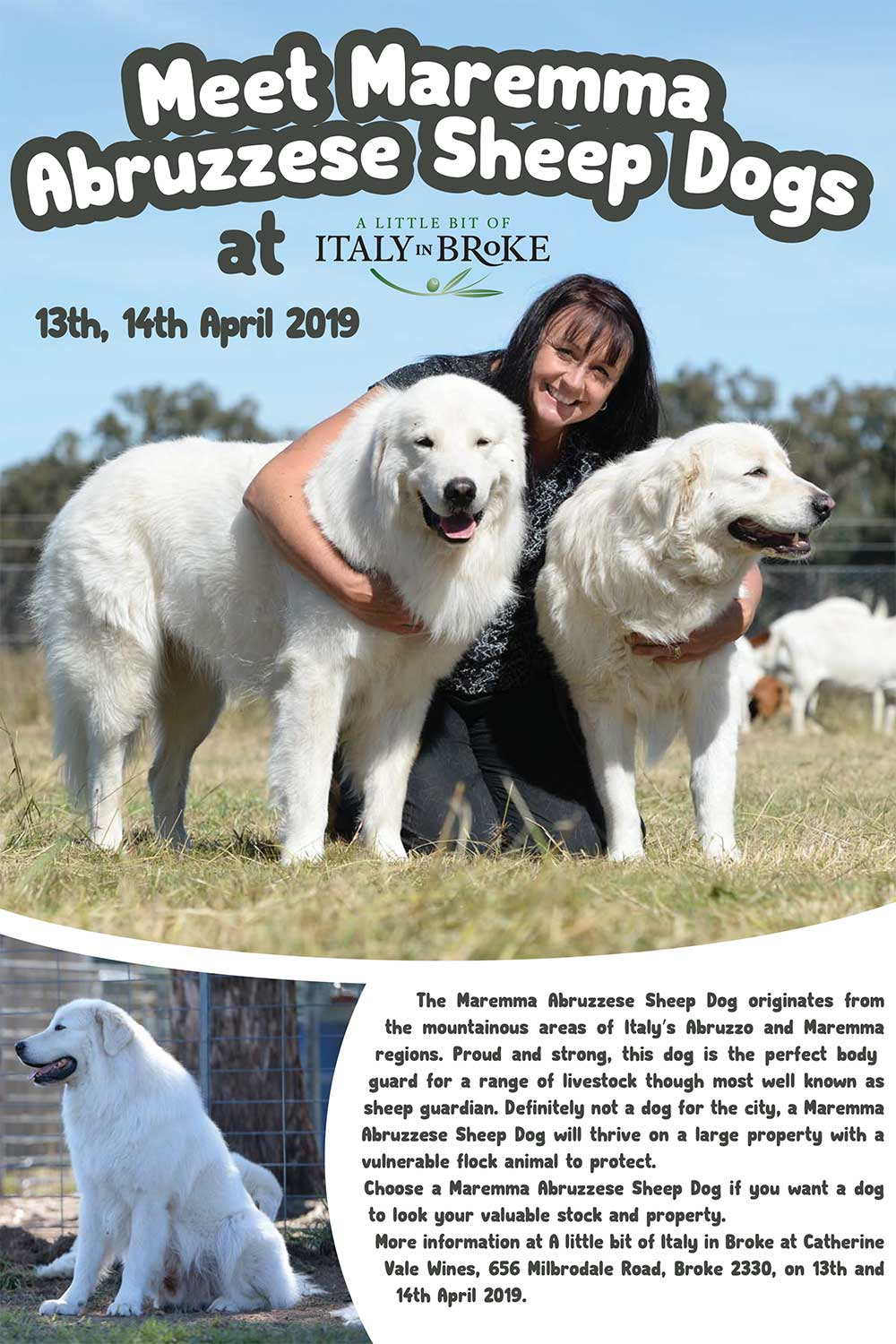 Catherine Vale Wines, Maremma Sheep Dogs